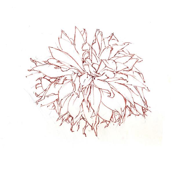 "Petal Dance - Wilting, 6 5"" x 7"", sepia ink"