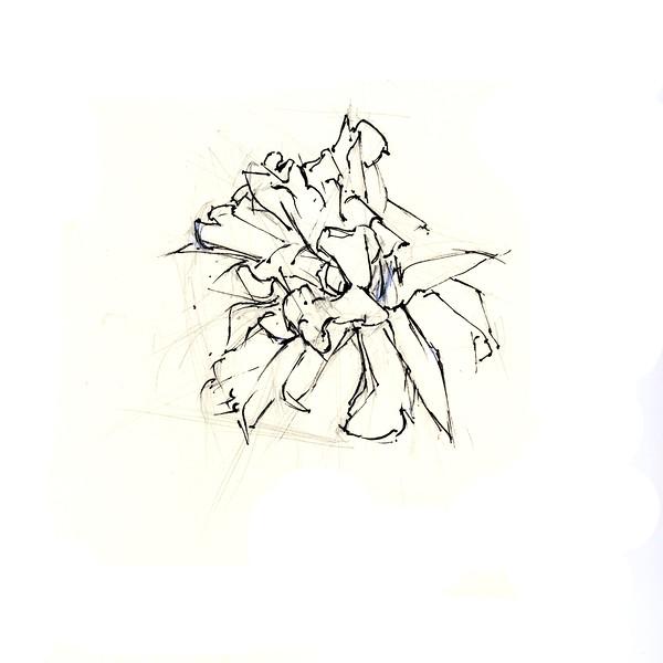 """Dying Daffodil 4, 5"""" x 5"""", ink"""
