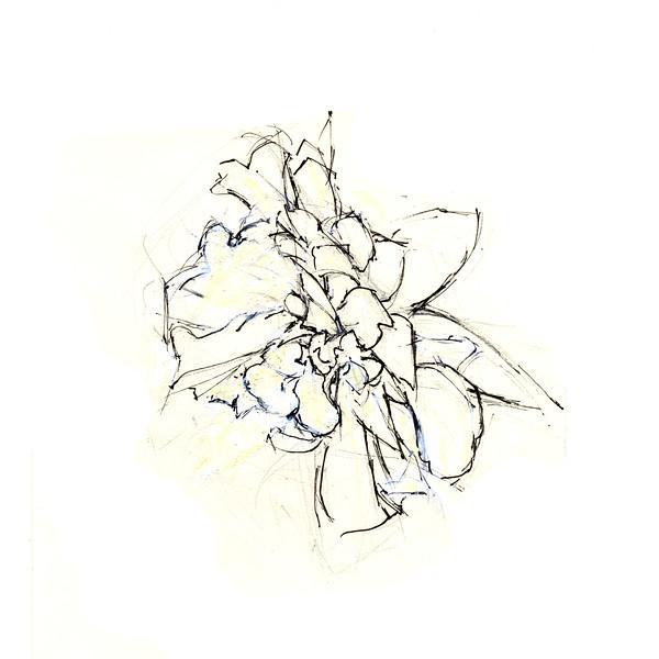 """Dying Daffodil 1, 5"""" x 5"""", ink"""