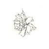 """Dying Daffodil 2, 5"""" x 5"""", ink"""