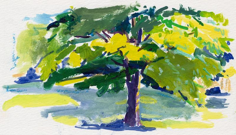 "Sunlit Tree, 4""x7"", acrylic on paper"