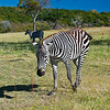 081109_Fossil Rim Wildlife_089