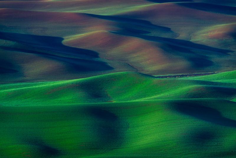 Palouse Rolling Fields