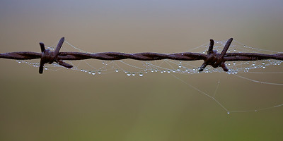 Dew Drops and Spiders Webs on Rusty Barbed Wire. ~WIDE VIEW~