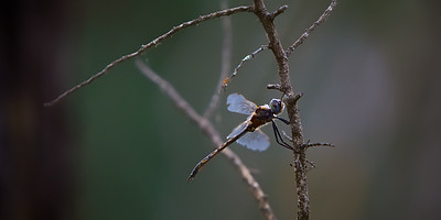 Dragon Fly - A dragonfly on his last days. ~WIDE VIEW~