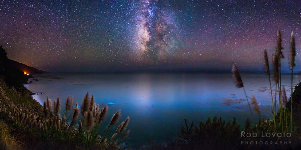 Bioluminescent Big Sur