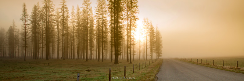 DF.5087 - Backroad and foggy larch forest at sunrise, Bonner County, ID.
