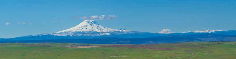 DF.4252 - Mt. Adams, Mt. Rainier, and North Cascades, from Columbia Hills State Park, WA.