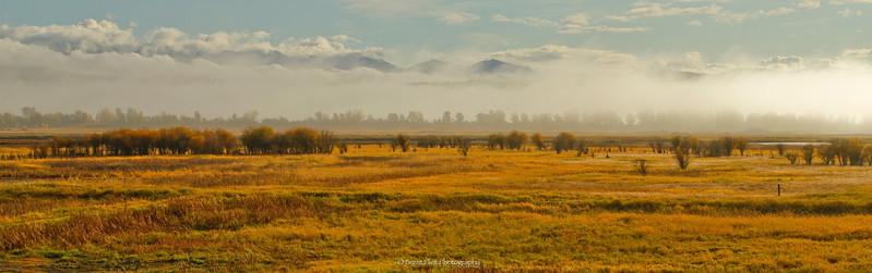 DF.1882 - fog over marsh, Kootenai National Wildlife Refuge, ID.