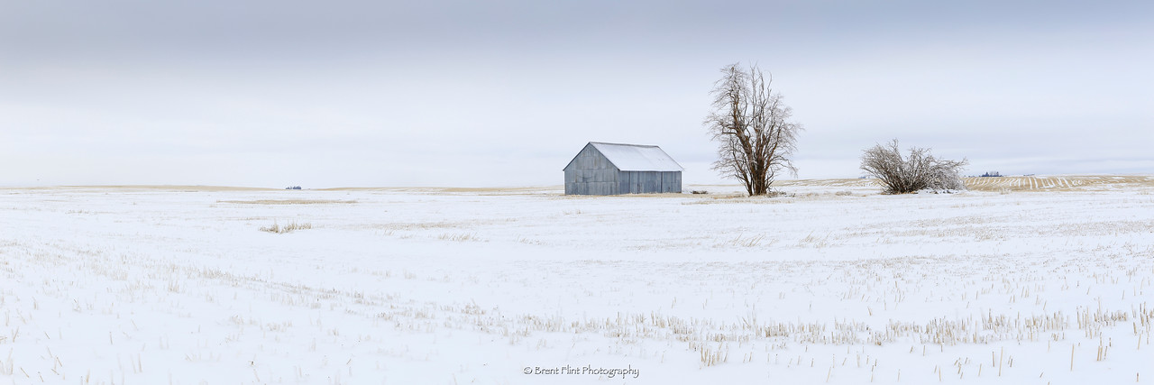 DF.4462 - barn and trees in stubble field with snow, Lincoln County, WA.