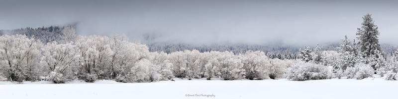 DF.4472 - winter trees and fog, Blanchard Lake, Bonner County, ID.
