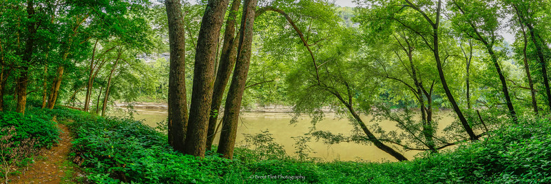 DF.4328 - bottomland forest on the shores of the Kentucky River, Tom Dorman State Nature Preserve, Garrard County, KY.