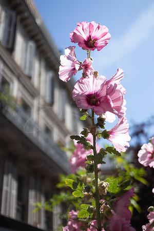 les fleurs   flowers