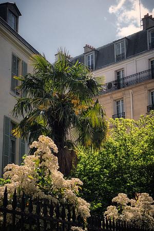 un palmier parisien | a parisian palm tree