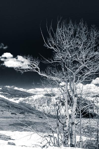 Aspen with Cloud