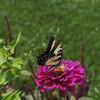 Hillwood Gardens DC - 07-18-08 - 058 NX_dxo