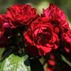 Hillwood Gardens DC - 07-18-08 - 029 NX_dxo