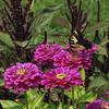 Hillwood Gardens DC - 07-18-08 - 053 NX_dxo