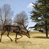 Meadowlark Gardens - 03-15-08 - 094 NX_dxo