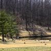 Meadowlark Gardens - 03-15-08 - 021 NX_dxo