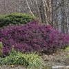 Meadowlark Gardens - 03-15-08 - 116 NX_dxo
