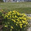 Meadowlark Gardens - 03-15-08 - 109 NX_dxo