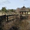 Meadowlark Gardens - 03-15-08 - 081 NX_dxo