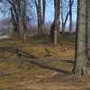 Meadowlark Gardens - 03-15-08 - 103 NX_dxo
