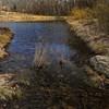 Meadowlark Gardens - 03-15-08 - 054 NX_dxo
