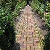 The Glen Burnie Gardens - 07-20-08 - 059 NX_dxo