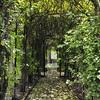 The Glen Burnie Gardens - 07-20-08 - 005 NX_dxo