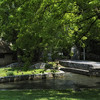 The Glen Burnie Gardens - 07-20-08 - 029 NX_dxo