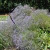 The Glen Burnie Gardens - 07-20-08 - 069 NX_dxo