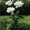 The Glen Burnie Gardens - 07-20-08 - 080 NX_dxo