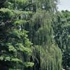 The Glen Burnie Gardens - 07-20-08 - 027 NX_dxo