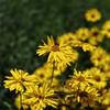 The Glen Burnie Gardens - 07-20-08 - 071 NX_dxo