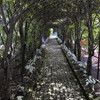 The Glen Burnie Gardens - 07-20-08 - 020 NX_dxo