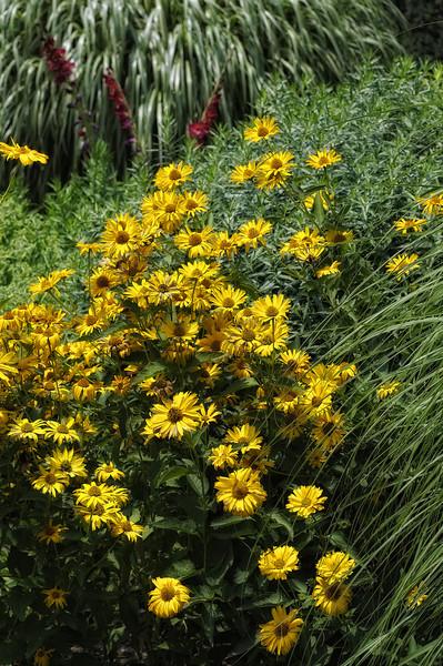 The Glen Burnie Gardens - 07-20-08 - 068 NX_dxo