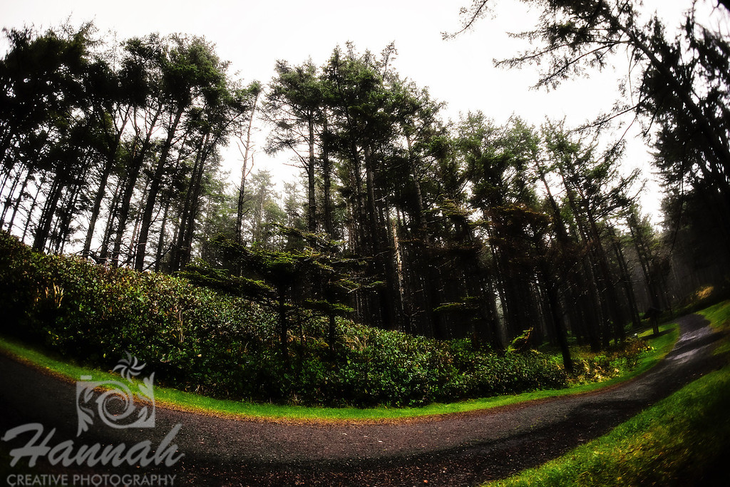 Trail at Cape Lookout State Park in the Oregon Coast  © Copyright Hannah Pastrana Prieto