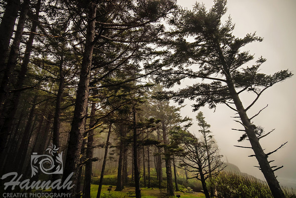 Trees on a gloomy and foggy day at Cape Lookout State Park in the Oregon Coast  © Copyright Hannah Pastrana Prieto