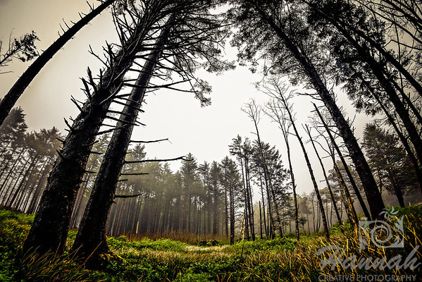 Trees and Grass at Cape Lookout State Park in the Oregon Coast  © Copyright Hannah Pastrana Prieto