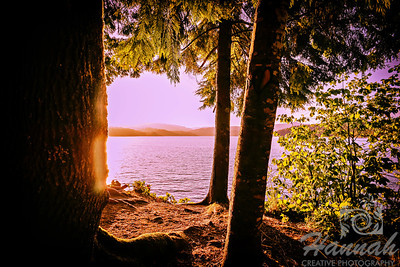 Trees at sunset located at Henry Hagg Lake & Scoggins Valley Park in Oregon  © Copyright Hannah Pastrana Prieto