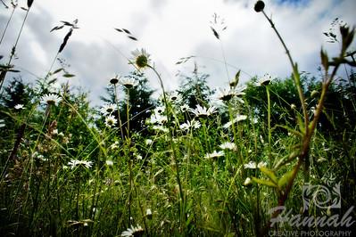 Wildflowers found at L.L. Stub Stewart State Park in Oregon  © Copyright Hannah Pastrana Prieto