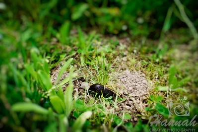 Close-up of a slug found at L.L. Stub Stewart State Park in Oregon  © Copyright Hannah Pastrana Prieto