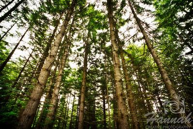 Tall forest trees at L.L. Stub Stewart State Park in Oregon  © Copyright Hannah Pastrana Prieto