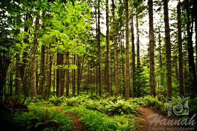 Tall forest trees at L.L. Stub Stewart State Park in Oregon  © Copyright Hannah Pastrana Prieto