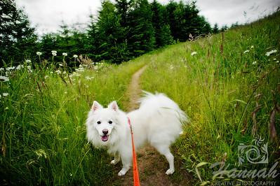 An American Eskimo dog on a trail at L.L. Stub Stewart State Park in Oregon  © Copyright Hannah Pastrana Prieto