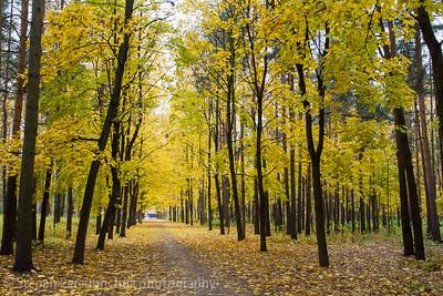 Leafy walkway in golden autumn