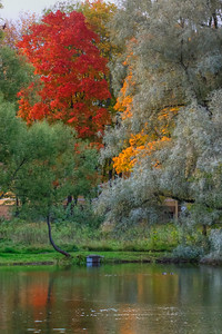 Red tree in fall.