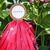 Piper_010